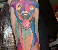 Colourful Dog